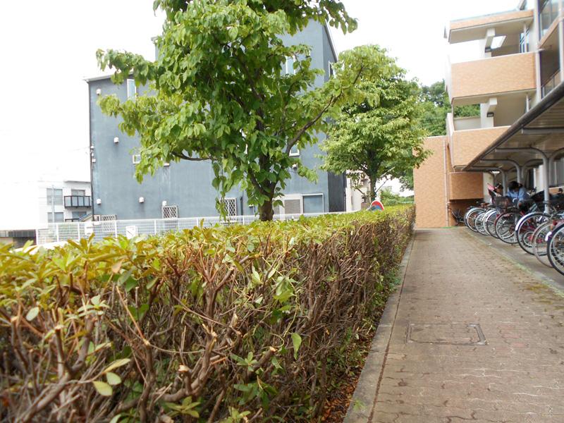 駐輪場付近の低木剪定業務
